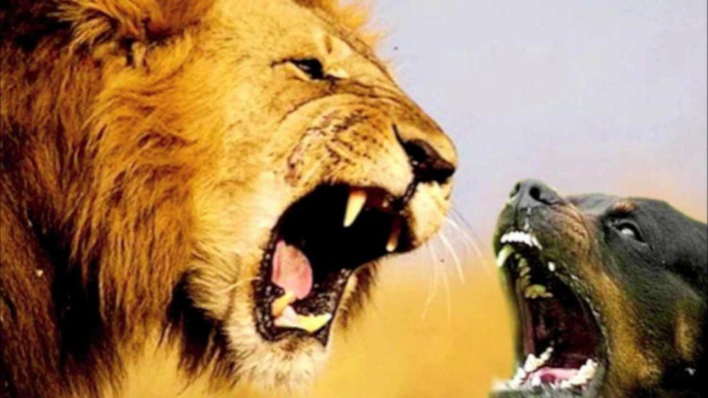 शेर से बडा कुकुर – (भोजपुरी लघु काहानीः गोविन्द दुबे)