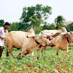 पर्सा जीला के किसानसब भारत पर निर्भर